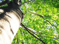 霧島市でリラックス効果のある森林セラピーとは?の画像