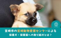 宮崎市の宮崎動物愛護センターによる保護犬・保護猫への取り組みとは?の画像