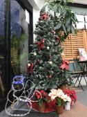 メリークリスマス☆彡の画像