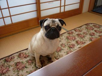愛犬花子の画像