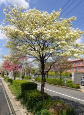 出生記念樹の画像