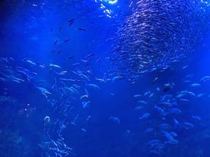 京都水族館に行ってみたの画像