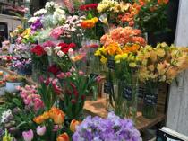 横浜市中区でガーデニングにおすすめの花屋をご紹介!の画像