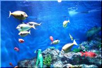 川崎区の「カワスイ(川崎水族館)」とは?館内の歩き方や環境への取り組みをご紹介!の画像