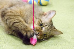 盛岡市で猫と遊べる「猫喫茶 空陸家盛岡店」とは?猫の魅力もあわせてご紹介!の画像