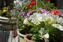 鴻巣市でガーデニングをしたいなら?おすすめのお花屋さんを紹介!!の画像