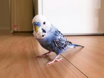 ペット不可の賃貸物件でも鳥なら飼えるケースも!交渉方法や飼う時の注意点の画像