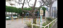 大田区立原自動公園へ行きましたの画像