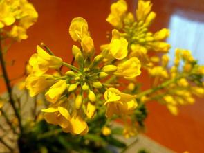 『春を感じるプレゼント!!』の画像
