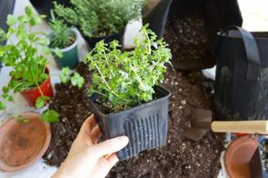 マンション購入をしてベランダガーデニングをしたい方必見!おすすめの植物や注意点とは?の画像