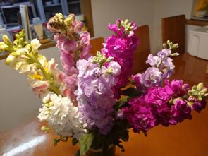 『房総の春!!』の画像