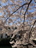 春の陽気!の画像