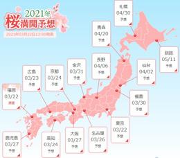 桜の開花情報の画像