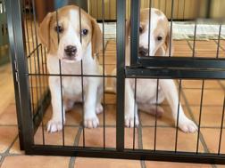 犬を飼いたい方におすすめ!千葉市の保護犬の情報をチェックしようの画像