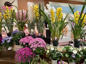 ガーデニングだけでなくお祝いごとにも利用できる!高崎市にあるおすすめの花屋の画像