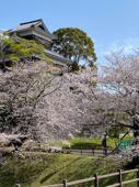 〇 令和3年 桜 〇の画像