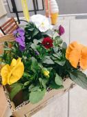 お花がいっぱいプロジェクトの画像