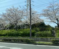 【☆スタッフブログ☆】春の訪れを感じました(*'ω'*)の画像