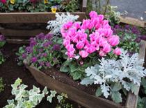 ガーデニングを始めたい方へ!盛岡市でおすすめの花屋2選の画像