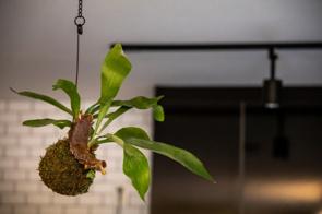 賃貸物件でも大丈夫!天井を有効活用する吊り下げインテリアを楽しむ方法の画像