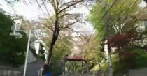 桜坂通る 4月3日の画像