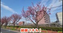 大田区の春 お花が綺麗だったので【大田区中央付近】の画像