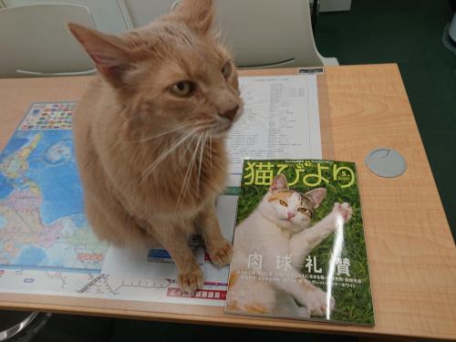 「猫びより」5月号発売!上野のレオ社長も看板猫として登場!の画像
