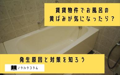 賃貸物件でお風呂の黄ばみが気になったら?発生原因と対策を知ろうの画像