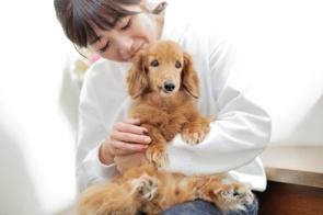 大阪市北区でおすすめのペットショップ2選!かわいいペットとの生活を始めませんか? の画像