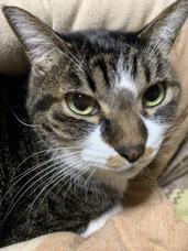 猫2の画像