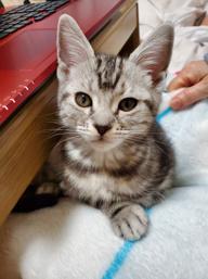 ★スタッフ 飼い猫③★の画像