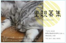 保護ネコの里親探し始める。の画像
