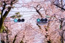 桜新町でサザエさんが名物なのはなぜ?サザエさんと桜新町の関係とはの画像