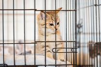 神戸市で取り組んでいる地域猫活動とは?いろいろな視点から考える地域猫の活動をご紹介の画像