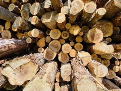 『ウッドショック』とは!?コロナ禍の陰に潜む木材高騰の理由についての画像