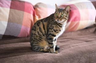 ペットを飼っていた部屋の原状回復とは?不動産管理で気を付けたいことの画像