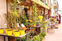 引越し後にガーデニングがしたい!霧島市にある花屋をチェックの画像