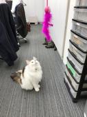 猫じゃらしの画像