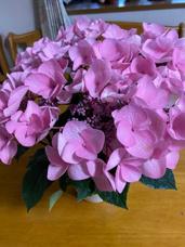 花・花・花の画像