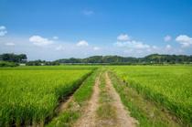農地転用できない土地がある?特徴や売却の方法をチェック! の画像