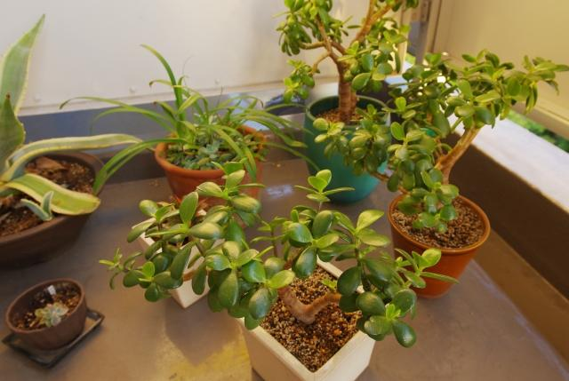 賃貸物件のベランダでガーデニングを楽しむには?注意点やおすすめの植物もの画像