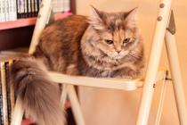 賃貸物件でペットを飼いたい!猫と一緒に暮らす場合の注意点は?の画像