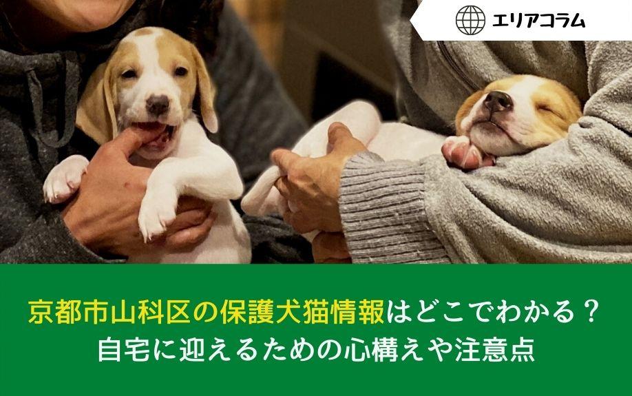 京都市山科区の保護犬猫情報はどこでわかる?自宅に迎えるための心構えや注意点の画像