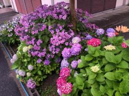 梅雨時期の花壇の画像