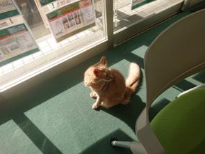 【台東区・上野 看板猫】夕日とレオ社長の画像