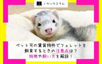 ペット可の賃貸物件でフェレットを飼育するときの注意点は?特徴や飼い方を解説!の画像