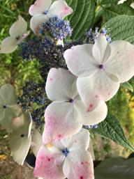 季節の花々の画像