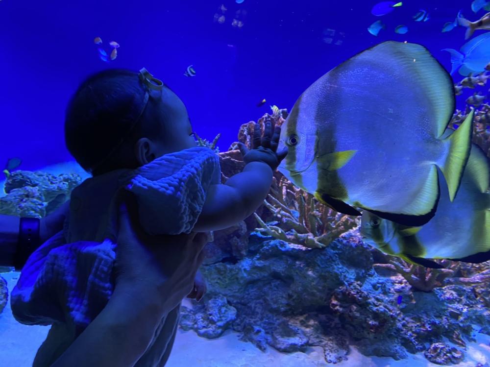 新江ノ島水族館の画像