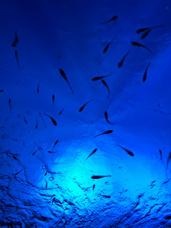夏だ海だ水族館だ☆白山で一人暮らし☆の画像