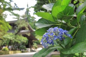 埼玉県川島町でおすすめの神社2選をご紹介します!の画像